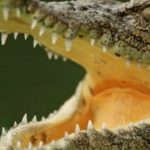 Crocodile Kills Ethiopian Pastor During Lake Baptism